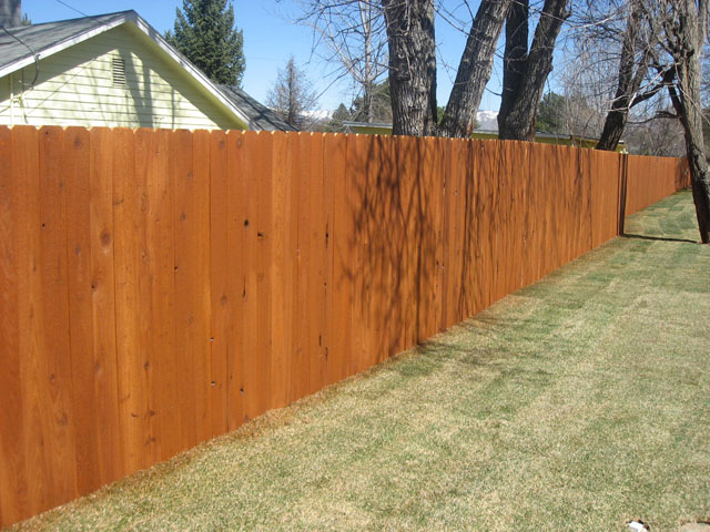 After Staining The Fence